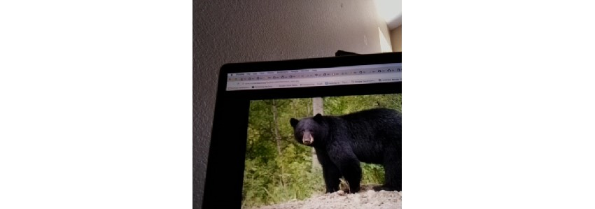 Picture of a bear taken with Android Things device