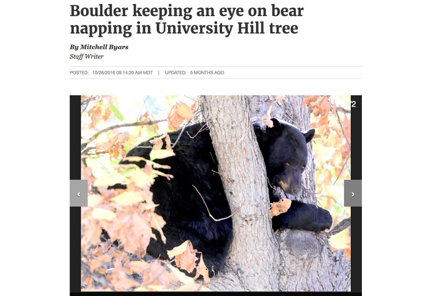 News article of a bear at CU Boulder in Colorado